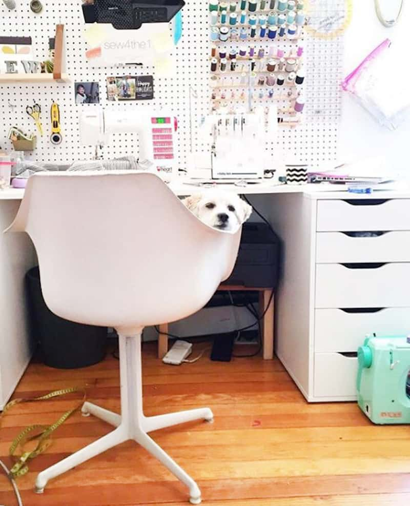 peg board hanging over a white table and a chair with a dog in it